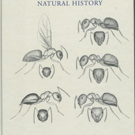 Ants of Florida: identification and natural history.