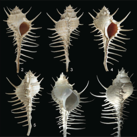 Mollusks from the Indian Ocean