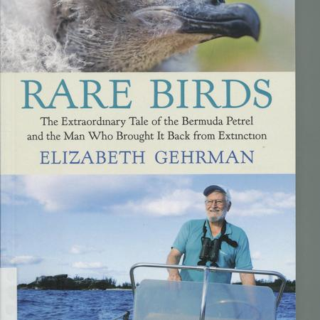 Rare birds: the extraordinary tale of the Bermuda petrel and the man who brought it back from extinction