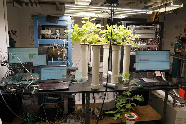 A photo of the plant lab, which contains a large metal table with three computers, many wires, and white tubes with red oak saplings