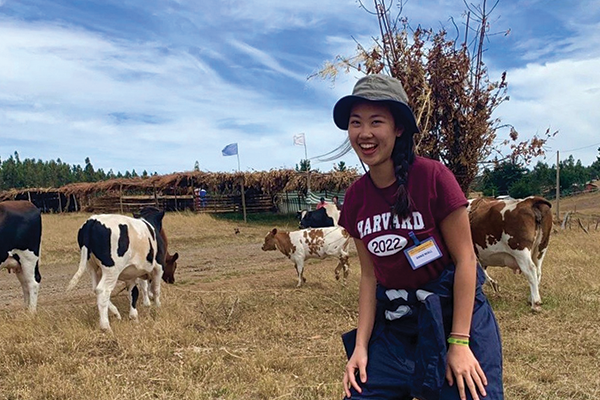 student in a field with cows