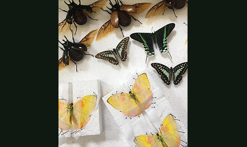 Butterfly Taxidermy for the Cabinet of Curiosities workshop