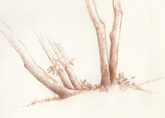 Sepia drawing of a tree.