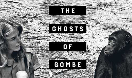Image for The Ghosts of Gombe lecture with Dale Peterson