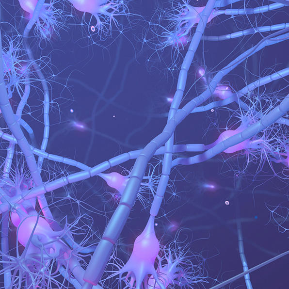 Stock image of neurons