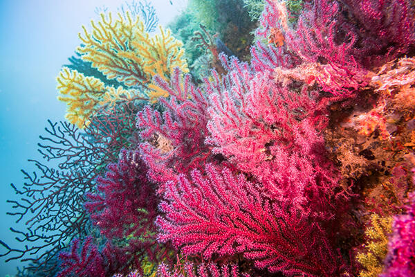 magenta blue yellow coral.