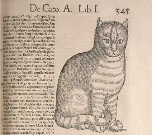 cat engraving from 1551