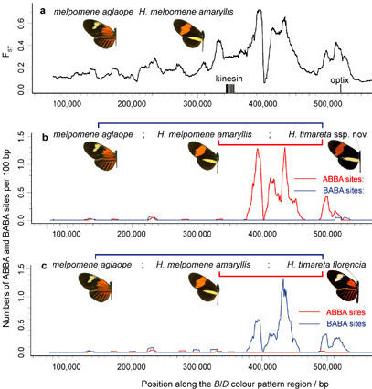 from Heliconius Nature 2012 Fig. 4