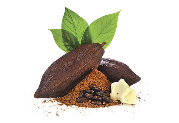 Two Cocoa beans on top of shaved cocoa.