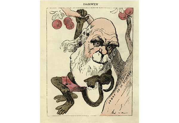 Cartoon of man, Darwin, with the body of a monkey hanging from a tree.