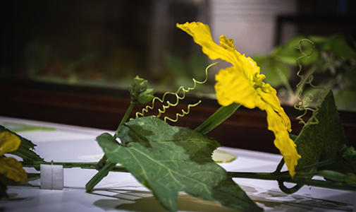 Glass Flowers image
