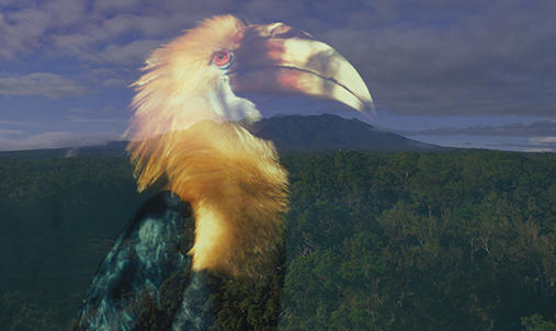 A bird superimposed on an image of a mountain.