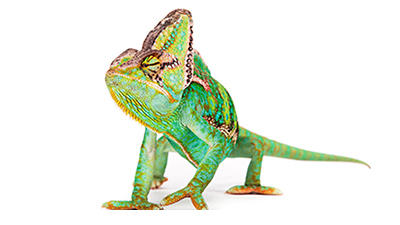 Image of green lizard