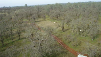 View of Tonzi Ranch from the top of the flux tower