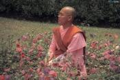 Buddhism gender-- monk sitting in field
