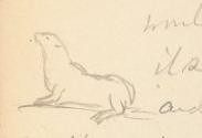 charming line drawing of seal in pencil on yellowed paper