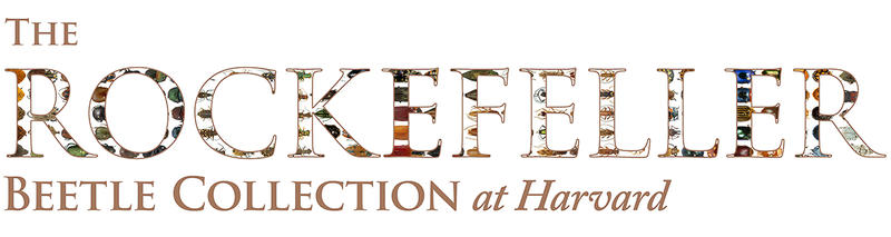 Rockefeller beetle collection banner