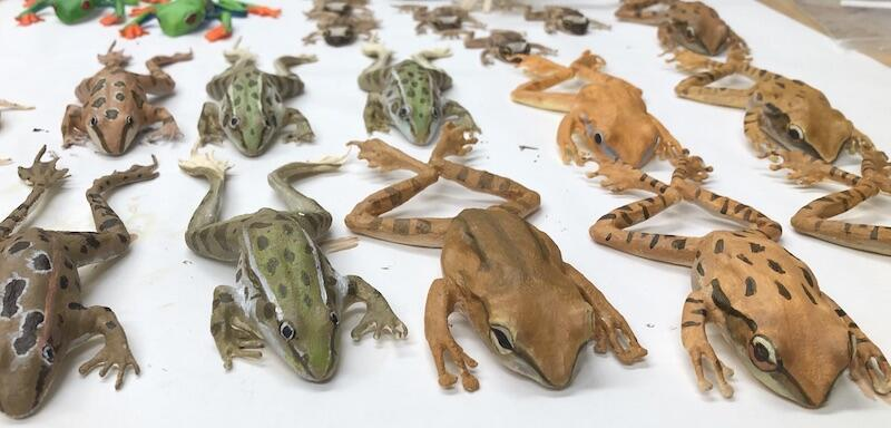 Rows of 3D printed frogs.