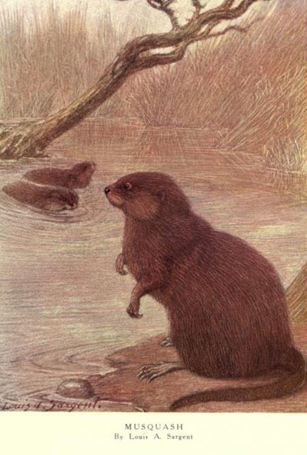Illustration from 'The wild beasts of the world' by Frank Finn. London: T. C. & E. C. Jack, [1909?].
