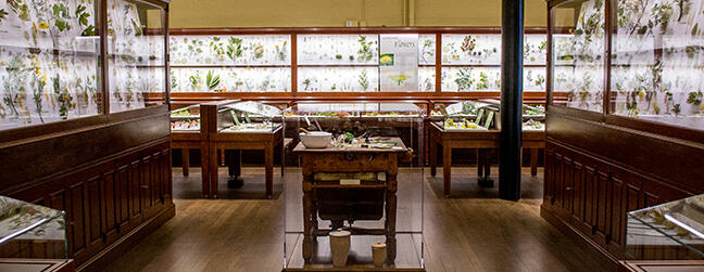 Image of the Glass Flower Gallery at the Harvard Museum of Natural History