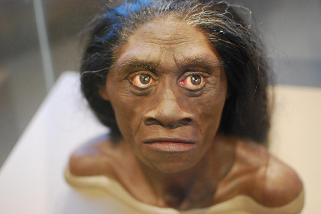 Homo Floresiensis courtesy of Karen Neoh on Flickr, CC BY 2.0