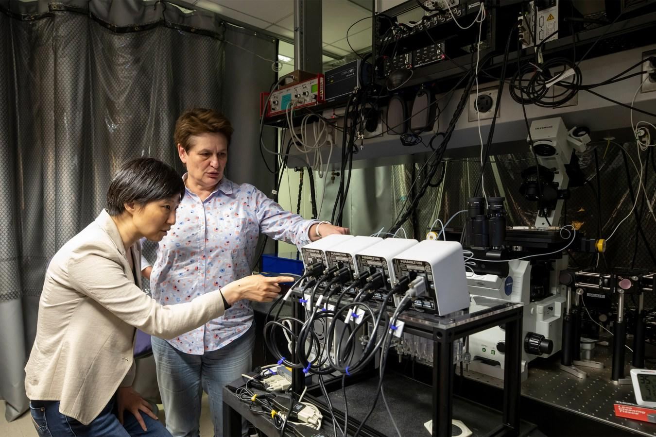 In her lab, Xiaowei Zhuang (left) developed imaging technology that she and Catherine Dulac utilized to create a cellular atlas of a key area in the brains of mice