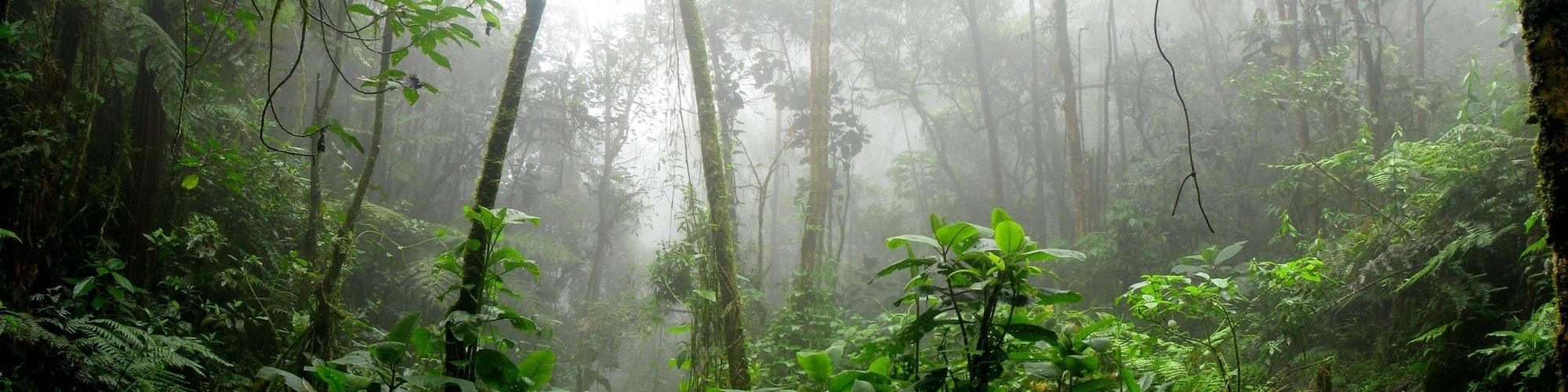 Amazon Forest in Colombia