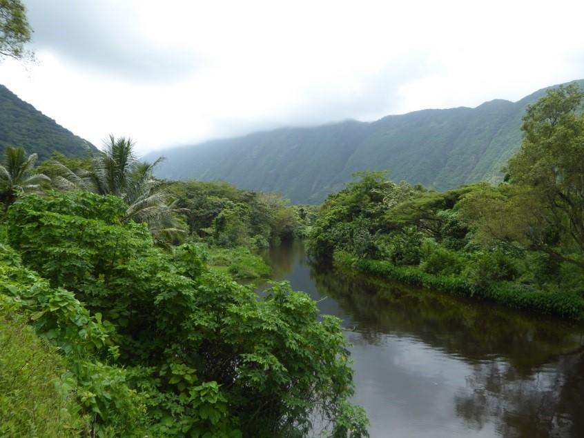 Several small streams cascade down the cliff walls and contribute to the Wailoa Stream that runs through the Waipi'o Valley.