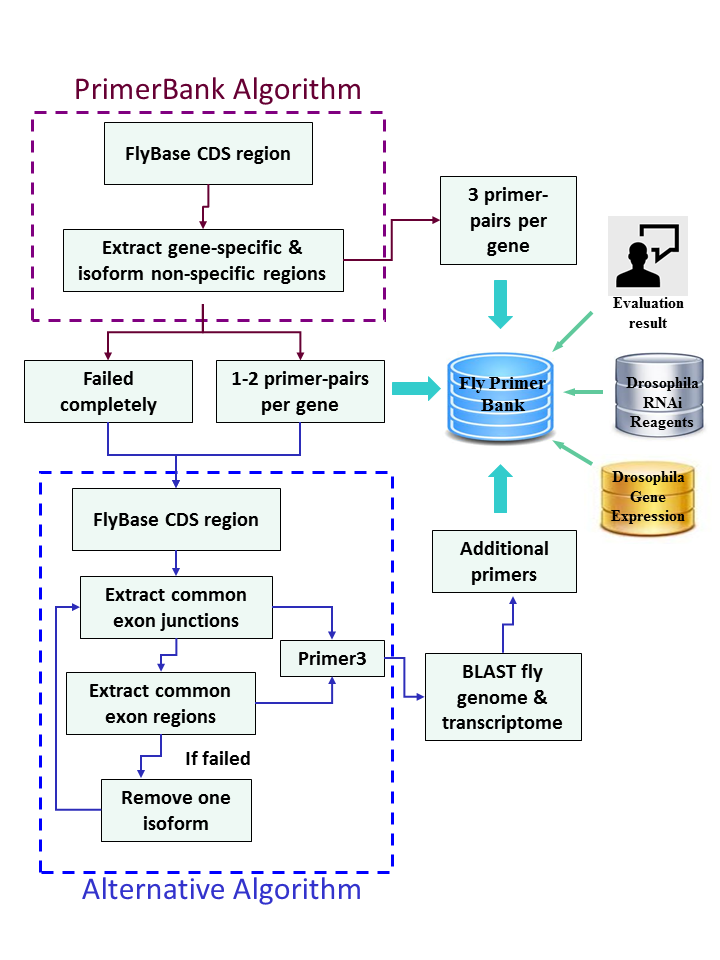 FlyPrimerBank workflow diagram