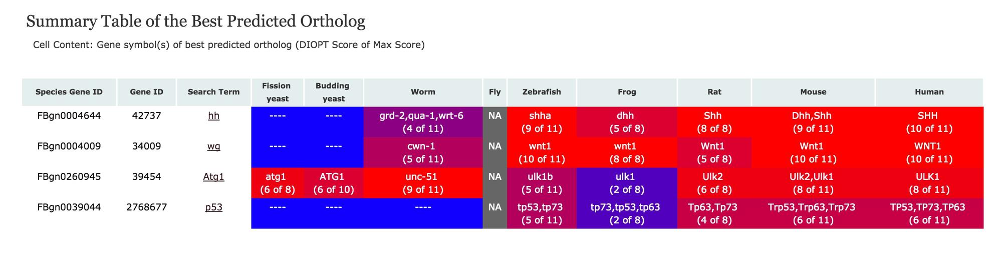 Summary of Best Scores following a search with fly hh, wg, Atg1, and p53 genes
