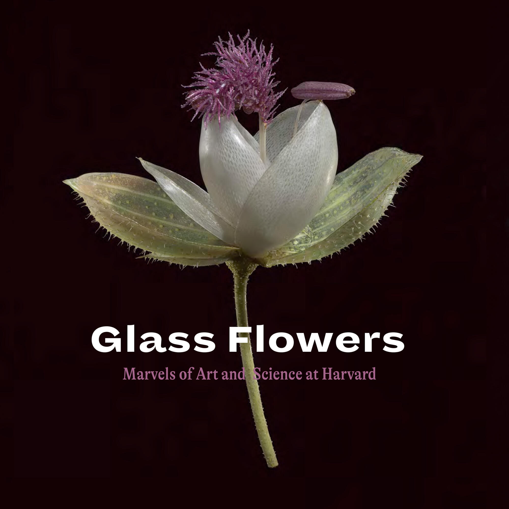 Glass Flowers Marvels of Art and Science Cover