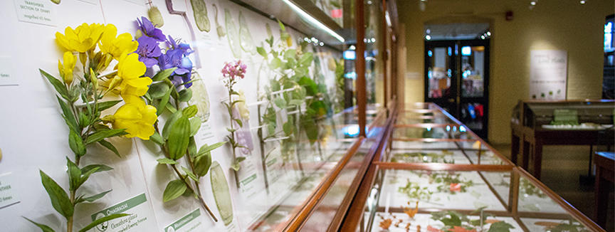 Glass Flowers Gallery Image