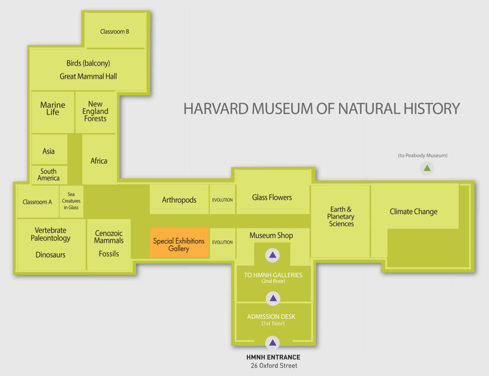 Image of museum floor plan