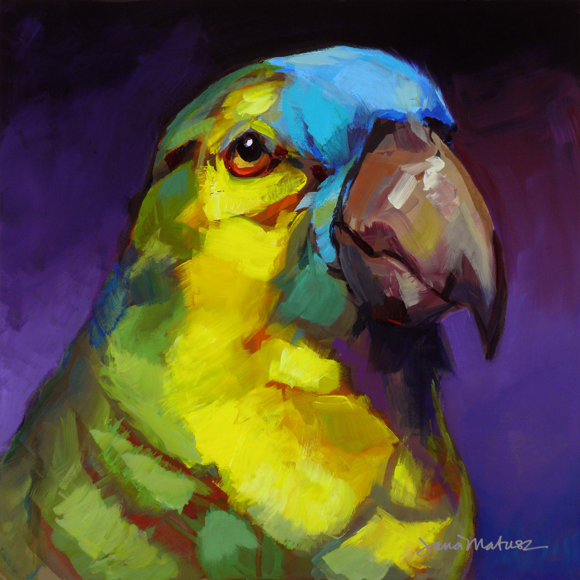 Painting of a Turquoise-Fronted Amazon.