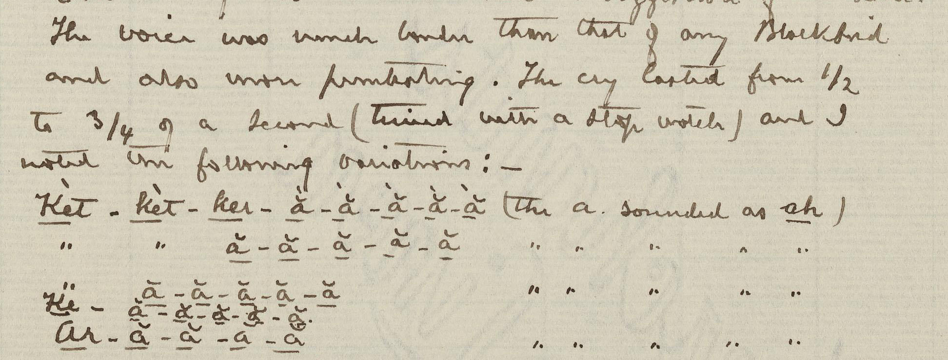 Part of a page from Brewster's journal that shows a written rendition of bird sounds.