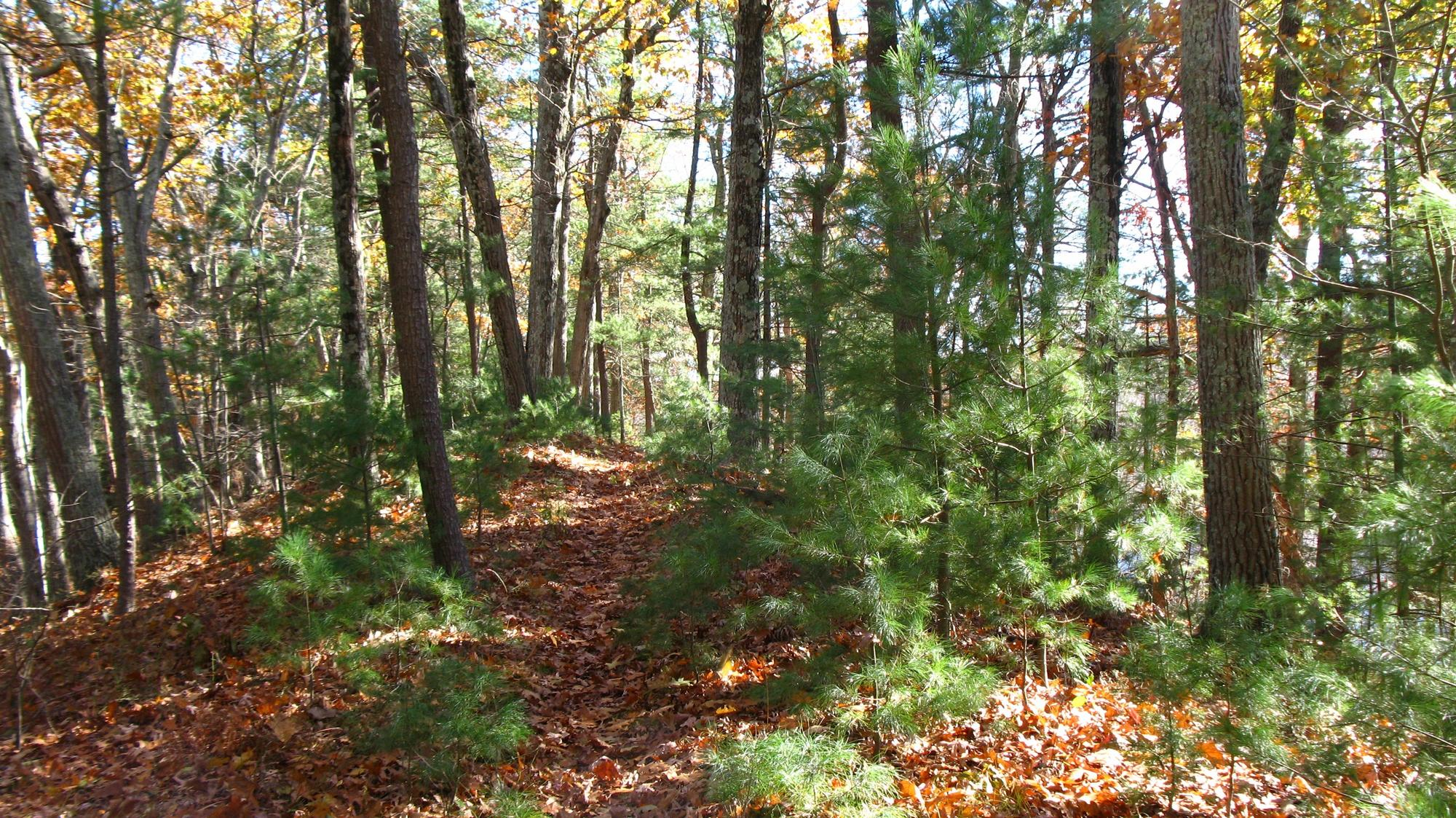Trail along ridge of Dakins Hill.