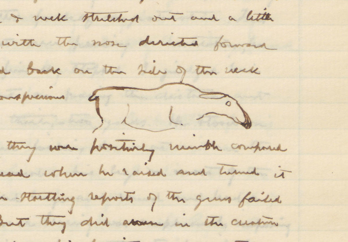 Pen and ink outline of the moose, surrounded by Brewster's handwritten notes.
