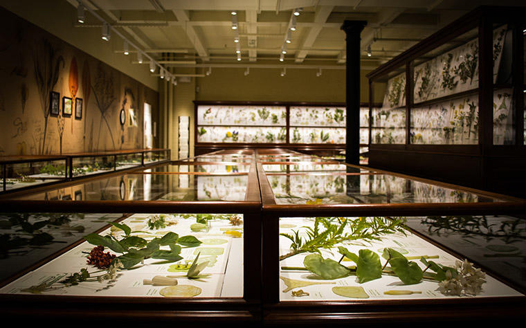 Cases with Glass Flowers in a gallery.