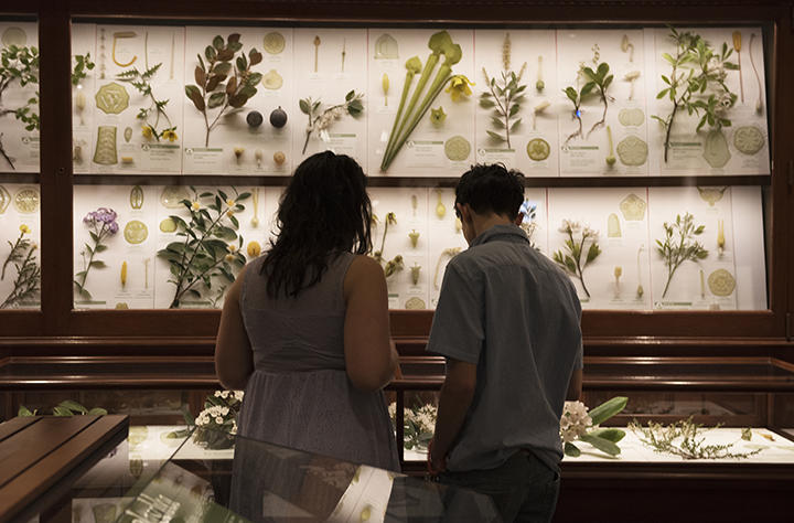 One female and one male looking at glass flowers.
