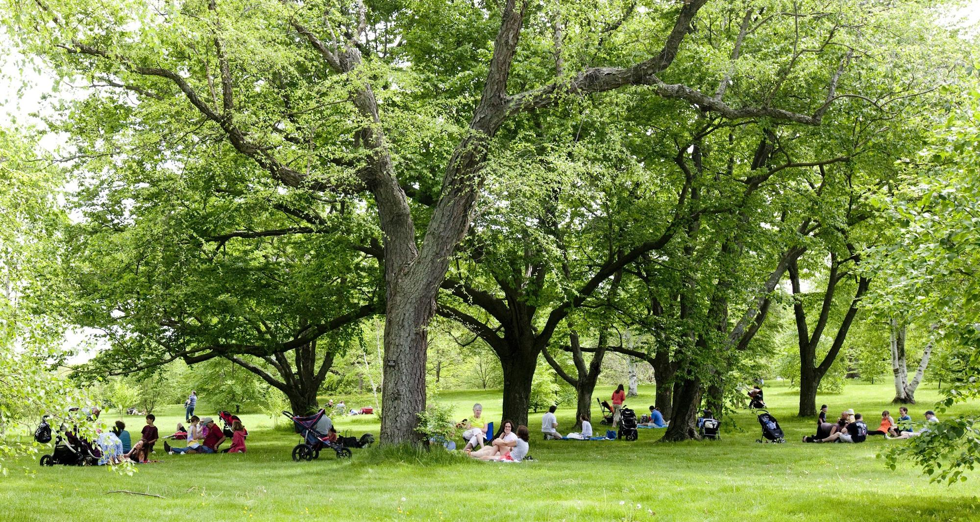 People sitting on the grass
