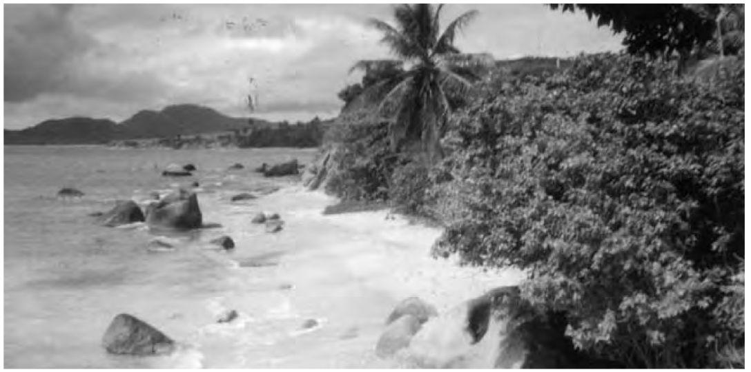 Puerto Rico: The Island and Beyond (Spring 2008)