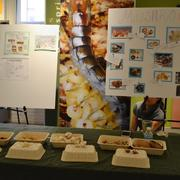 Fungi Fair Sprouts with Student Projects