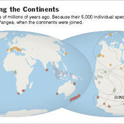 Professor Giribet explains continental shifts in The New York Times