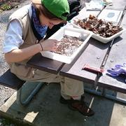 Collecting specimens, Great Smoky Mountains National Park