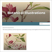 thumbnail of Botanical Illustrations CURIOUSity website