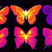 Infrared photographs of butterflies, where brightness correlates with the capability of radiative cooling