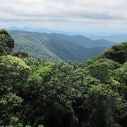 Model Predicts How The Amazon Forests Will React to Climate Change