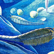 Artist rendering what the shrimp-like Cambrian species may have looked like. Illustration by Xiaodong Wang