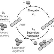 Illustration of protein aggregation