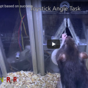 Still image from Joystick Angle Task Trial courtesy of Ölvecsky and Dhawale